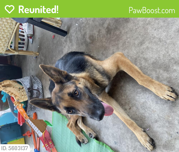 Reunited Female Dog last seen Near Lime Ave & E 71st St, Long Beach, CA 90805