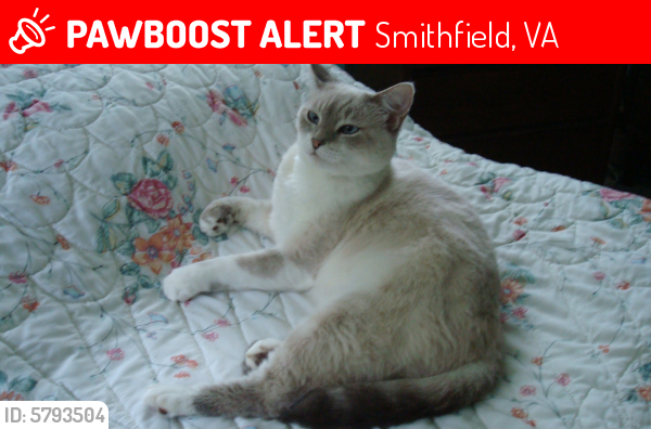 Lost Female Cat last seen lane crescent, Smithfield, VA 23430