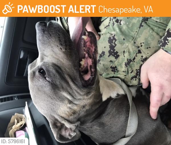 Found/Stray Female Dog last seen George Washington hwy, Chesapeake, VA 23323