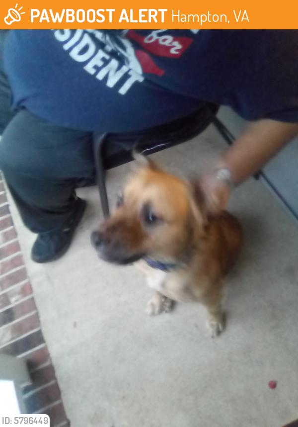 Found/Stray Female Dog last seen Soho st londonshire , Hampton, VA 23666