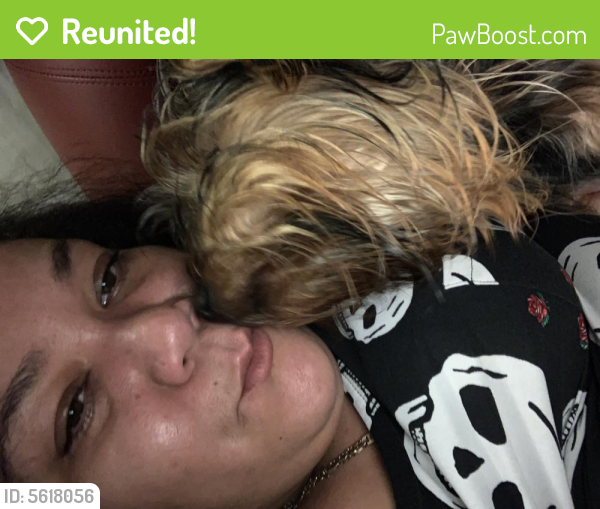 Reunited Male Dog last seen Near Pocahontas Pl & Tecumseh Dr, Hampton, VA 23661