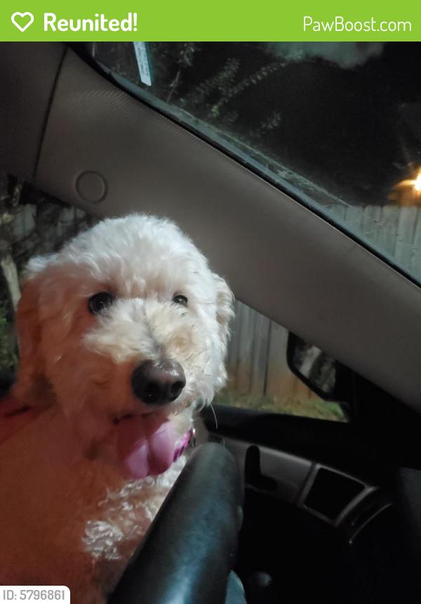 Reunited Female Dog last seen Cvs Atlanta rd smyrna ga, Smyrna, GA 30082