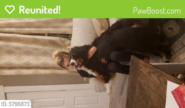 Reunited Male Dog last seen 19th and Russell, Covington, KY 41011