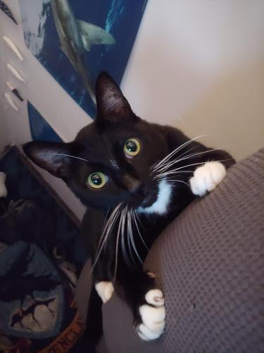 Lost Male Cat last seen Near York River Oyster Company , Gloucester Point, VA 23062