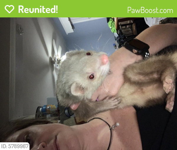 Reunited Male Ferret last seen Winshire St and Tidewater Dr , Norfolk, VA 23503