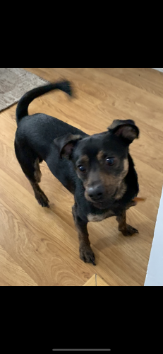 Lost Male Dog last seen Goff st and o'keefe Portsmouth, va, Virginia Beach, VA 23462