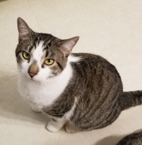 Lost Male Cat last seen Scotts Pond Drive, Old Towne Rd, Williamsburg, VA 23188