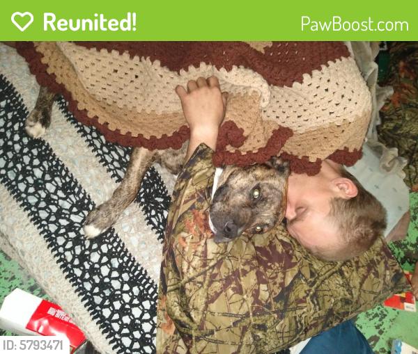Reunited Male Dog last seen Randolph St & Chestnut st, Portsmouth, VA 23704