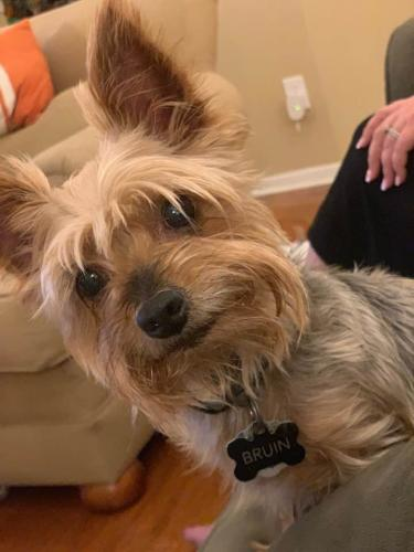 Lost Male Dog last seen Booker, Spring, TX 77373