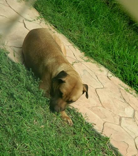 Found/Stray Female Dog last seen Tuckerton and Red Rugosa, Canyon Lakes At Stonegate, TX 77095