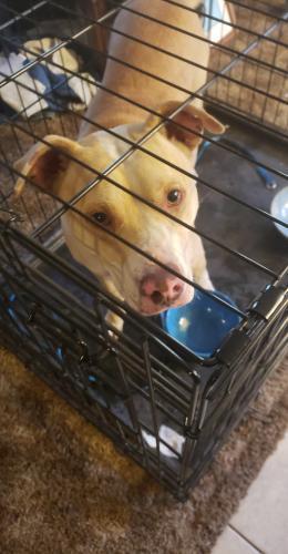 Found/Stray Female Dog last seen Sw 15th & agnew, Oklahoma City, OK 73108