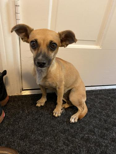 Found/Stray Female Dog last seen Grant rd  in front Christian Brothers , Cypress, TX 77429