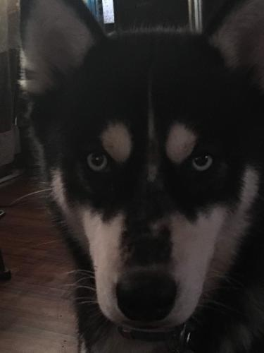 Lost Male Dog last seen Lumberton, Tx, Lumberton, TX 77657