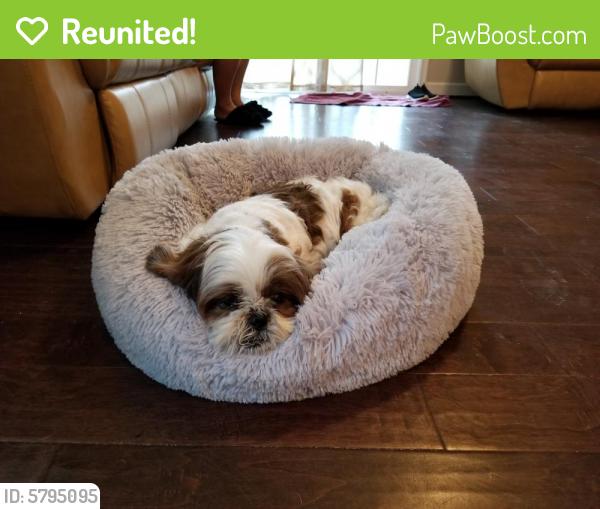 Reunited Male Dog last seen Butts station rd  & Kempsville rd , Chesapeake, VA 23320