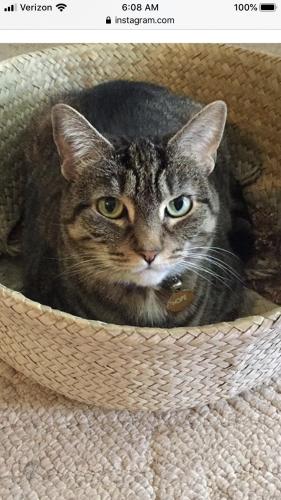 Lost Female Cat last seen Bonita and Gate St., Newport News, VA 23602