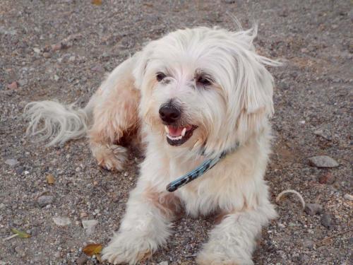Lost Male Dog last seen Dawson Avenue / 7th Street, Long Beach, CA 90804