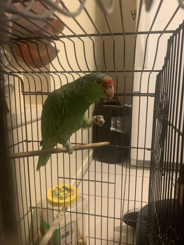 Found/Stray Unknown Bird last seen Buena Vista Street, Duarte, CA 91010