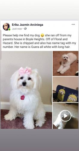Lost Female Dog last seen Floral and Hazard, Los Angeles, CA 90063