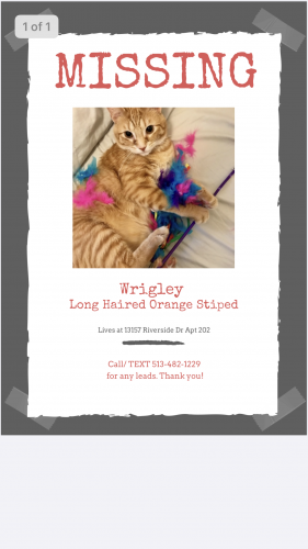 Lost Male Cat last seen Atoll and Riverside , Los Angeles, CA 91423