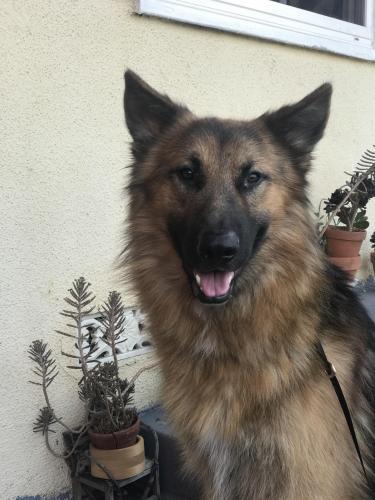 Lost Male Dog last seen Hollywood Way and San Fernando Rd, Los Angeles, CA 91352