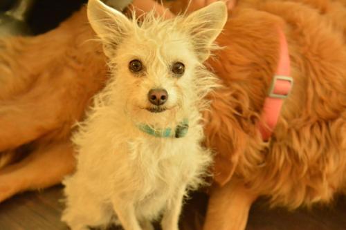 Lost Male Dog last seen St. Francis Medical Center, Beechwood Ave, Lynwood, CA, Lynwood, CA 90262