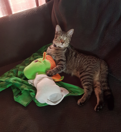 Lost Female Cat last seen Newland and Talbert, Bayshores condo, Huntington Beach, CA 92683