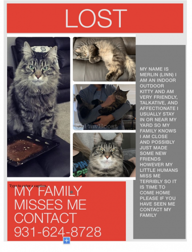 Lost Male Cat last seen Near fishermans , Norfolk, VA 23503
