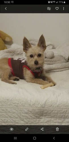 Lost Male Dog last seen Shrode Ave, Duarte, CA 91016