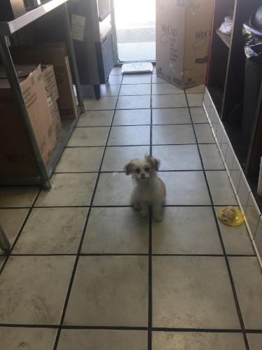 Lost Female Dog last seen Otis/Gifford, Huntington Park, CA 90255