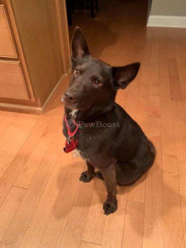 Lost Male Dog last seen Henderson dr, Fairfax Station, VA 22039