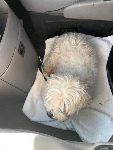 Found/Stray Female Dog last seen Val Vista & Southern, Mesa, AZ 85206