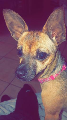 Found/Stray Female Dog last seen Near w 3rd st San Pedro, Los Angeles, CA 90071