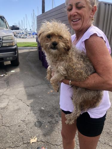 Found/Stray Male Dog last seen Shoreline Marina, Long Beach, CA 90802