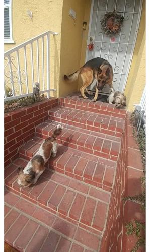 Found/Stray Unknown Dog last seen Gramercy and 149th, Gardena, CA 90249