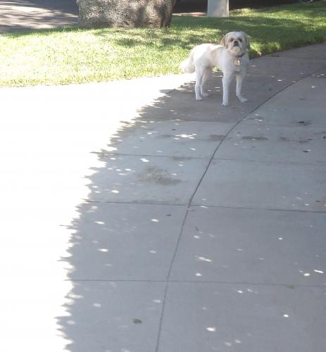 Found/Stray Unknown Dog last seen Allen ave, Pasadena, CA 91104
