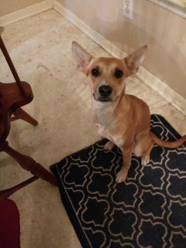 Found/Stray Female Dog last seen Champions and 1960, Houston, TX 77069