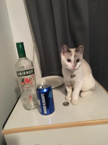 Lost Male Cat last seen Near carmalita , Bell, CA 90201