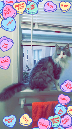 Lost Male Cat last seen Knowlton St and Knowlton Pl, Los Angeles, CA 90045