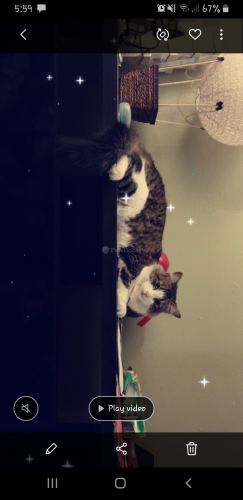 Lost Male Cat last seen Centinela Ave and Harding Ave, Los Angeles, CA 90066