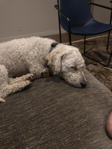 Lost Male Dog last seen Marine and Lincoln , Santa Monica, CA 90405