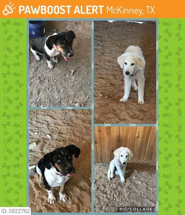 Rehomed Male Dog last seen CR408 between New Hope & Princeton , McKinney, TX 75071