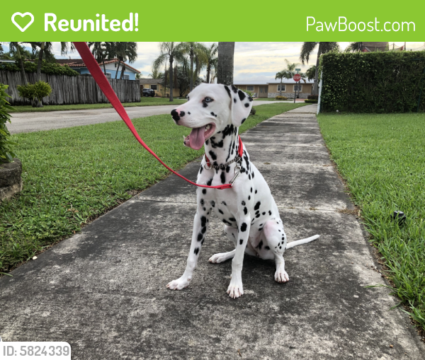 Reunited Female Dog last seen Near nw 175th st, Miami Gardens, FL 33015