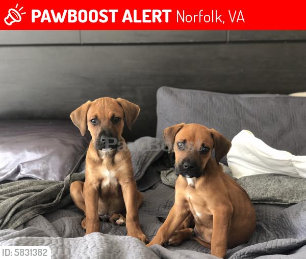 Lost Male Dog last seen Near e moreell circle, Norfolk, VA 23505