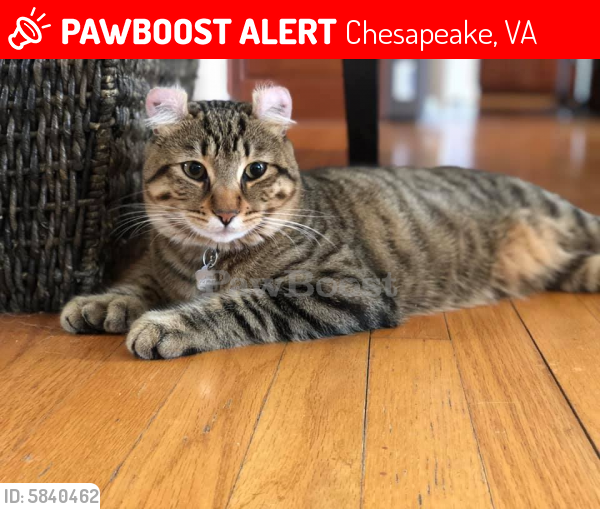 Lost Male Cat last seen Hanbury & Battlefield, Chesapeake, VA 23322
