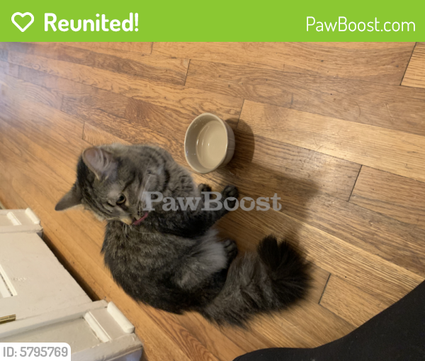 Reunited Female Cat last seen Arrowhead , Virginia Beach, VA 23462