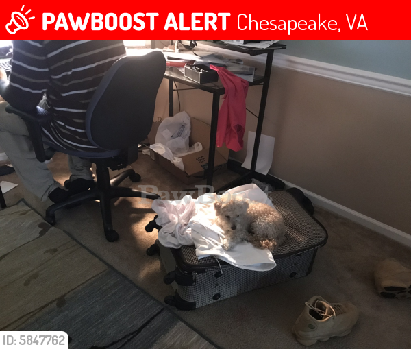 Lost Female Dog last seen Portsmouth Blvd& Joliff Landinf , Chesapeake, VA 23321