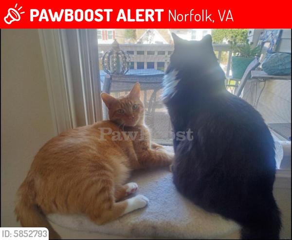 Lost Male Cat last seen Ocean View Avenue, Norfolk, VA 23518