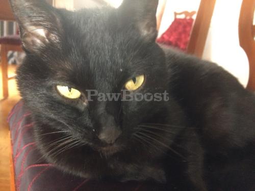 Lost Female Cat last seen General Booth, Princess Anne, Seaboard, Virginia Beach, VA 23456