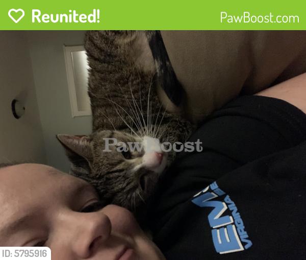 Reunited Female Cat last seen Near Logan Dr. Portsmouth, VA 23701, Portsmouth, VA 23701