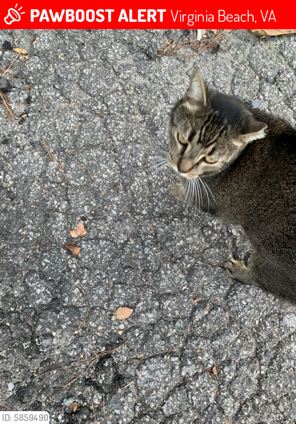 Lost Male Cat last seen Berkley place, Virginia Beach, VA 23452